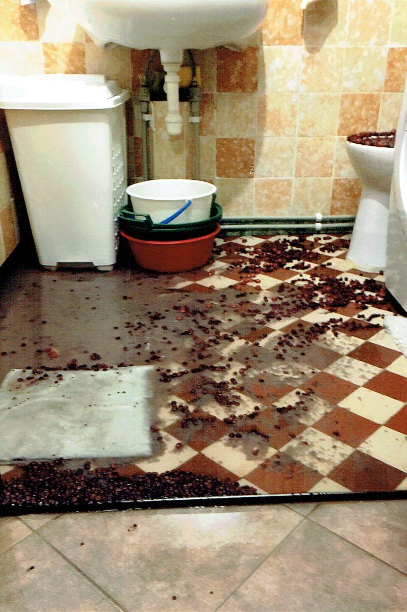 łazienkę Zalały Owoce Z Muszli Klozetowej Głogówextra
