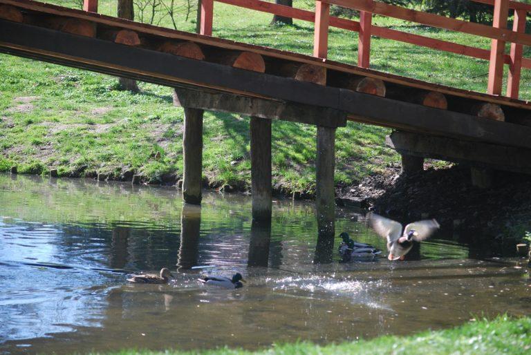 Głogowianie apelują o oczyszczenie oczek wodnych